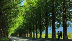 絶景ドライブルート インスタ映えする並木道 滋賀県高島市