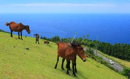 絶景ドライブルート 日本在来の野生馬が生息する岬の県道 宮崎県串間市