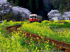 自然豊かな首都圏のオアシスへ、ぶらり旅気分でドライブ 千葉県市原市