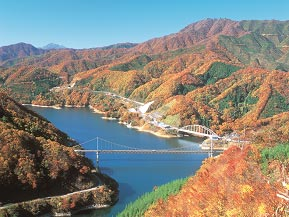 夢のかけはしを渡り、紅葉に染まる九頭竜湖沿いをドライブ 福井県大野市
