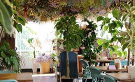 花々に埋もれてしまいそう!花屋さんのカフェで幸せ気分いっぱい 佐賀県佐賀市