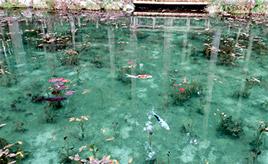 絵じゃなくて実写!?モネの「睡蓮」の世界が広がる名もなき池 岐阜県関市