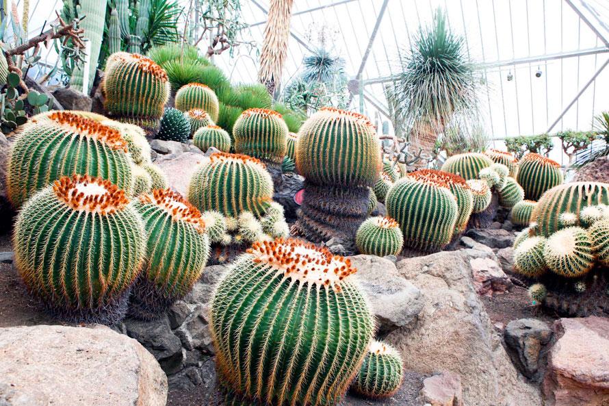 温室内には世界各地から集められた1500種類ものサボテンや多肉植物を栽培。春の季節に訪れたら、花が咲くサボテンの姿を観賞したい。