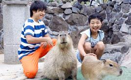 カピバラなどの動物たちとふれあえる!伊豆シャボテン動物公園 静岡県伊東市