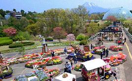 夜間庭園にも注目!日本最大級のフラワーパーク、とっとり花回廊へ行こう 鳥取県南部町