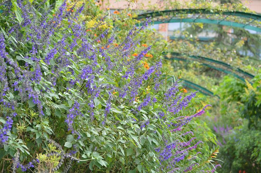 「花の庭」では、色を合わせる画家のパレットのように色彩豊かな季節の花が庭を彩る。