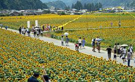 一面に広がるひまわりは圧巻!関西最大級のひまわり畑で夏を満喫しよう 兵庫県佐用町