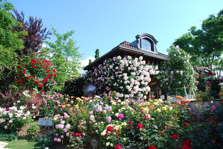 720品種1200株ものバラが咲き乱れるローズガーデンで多彩なバラを見て回ろう。7月までが見頃となる。