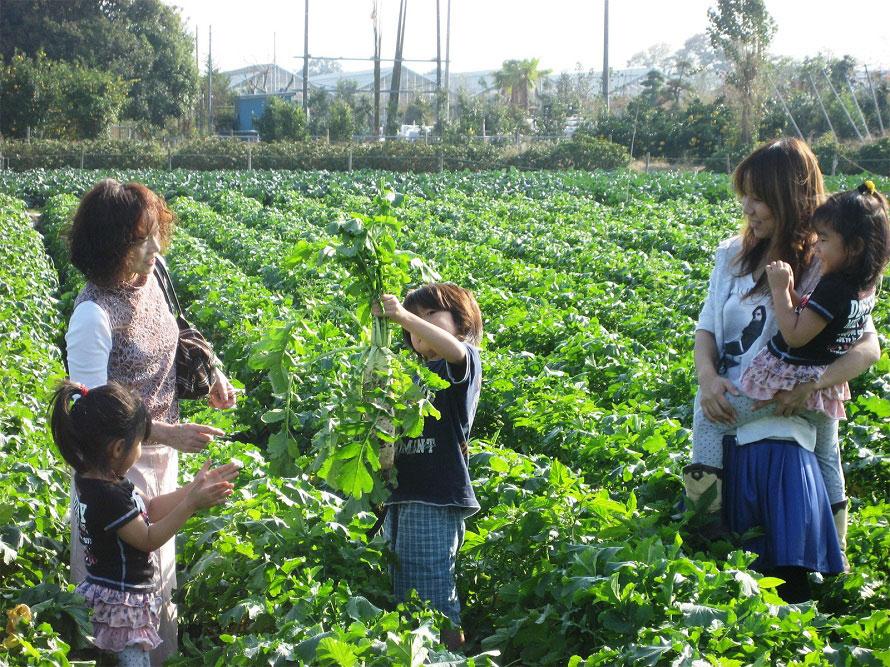カントリー農園では季節野菜の収穫体験が人気。当日受け付けで、事前予約は不要。その日に収穫できる作物から好きな野菜を選ぶことができる。