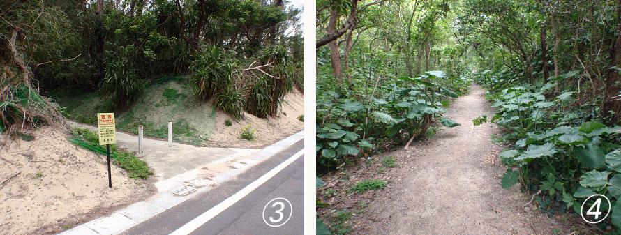 (C)龍郷町3:(写真左)県道82号線を左折したあと100mほど歩くと、写真のような林への入口があるのでそこから林道へ入る。4:(写真右)海岸までの林道にはアダンやクワズイモが自生し、奄美らしい自然風景が広がる。