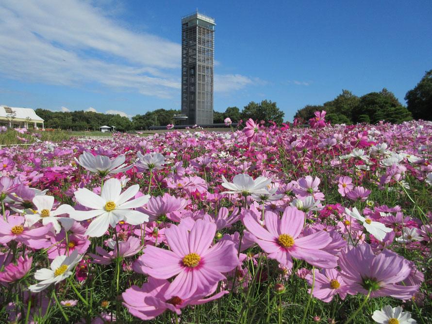 公園のほぼ中央にある展望塔は高さ50m。最上階の展望室からは、ガーデンパークを見下ろし浜名湖を一望することができる。