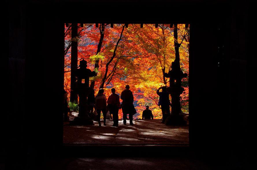 香積寺山門付近。巴川沿いの参道には特に背が高い木々が並び、紅葉の時期には「もみじのトンネル」と呼ばれている。