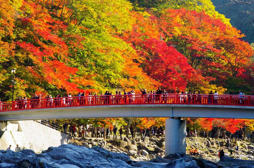 待月橋は香嵐渓を代表する撮影ポイント。飯盛山側には「五色もみじ」と呼ばれるモミジがあり、緑、黄緑、黄、橙、赤の五つの色のグラデーションを楽しめる。
