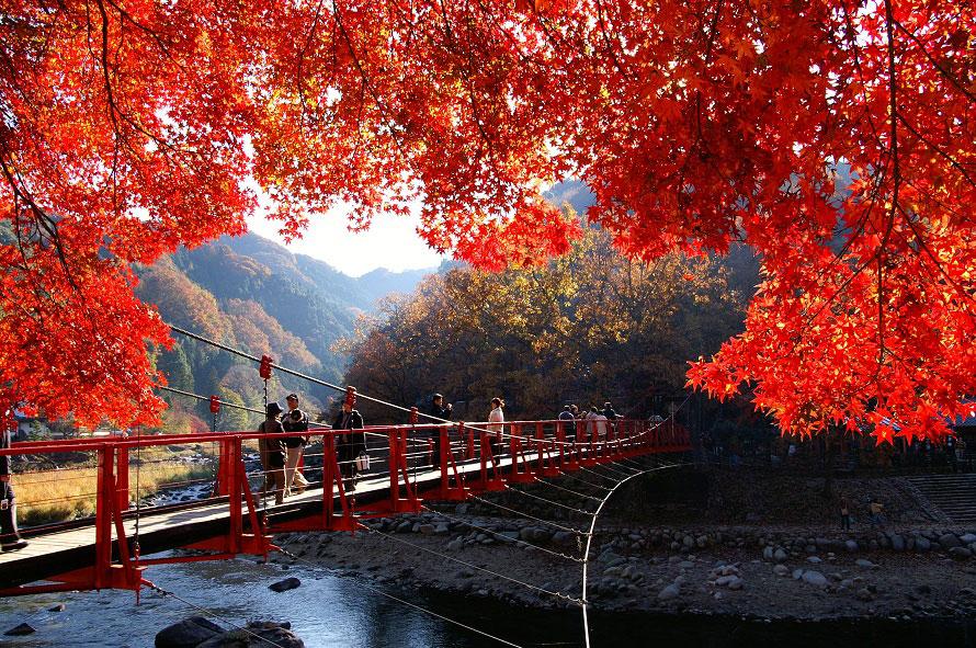 香嵐渓東側の赤いつり橋(香嵐橋)付近は朝日が当たる方角にあり、赤いモミジが鮮やか。