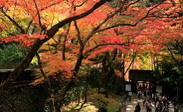 江戸時代からの歴史をつなぐ4000本もの紅葉!必見の香嵐渓もみじまつり 愛知県豊田市