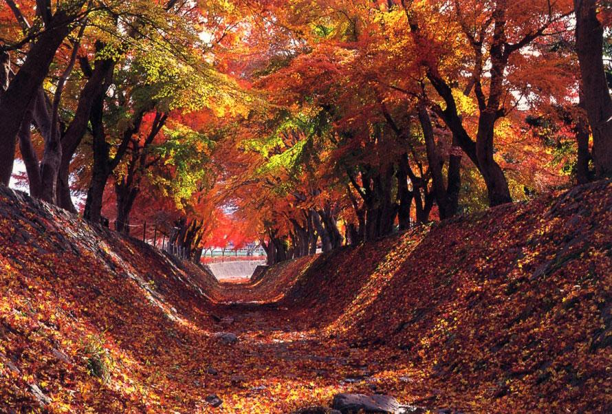 差し込む光が美しい、昼間のもみじ回廊。まつり会場は公園や畑を利用しているので、歩きやすい靴で出かけよう。