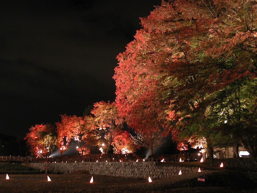 日没後は、もみじ回廊をメインに、周辺の紅葉がライトアップされる。