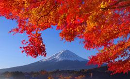 毎年大好評!河口湖畔の紅葉まつりで、もみじ回廊をくぐろう 山梨県富士河口湖町