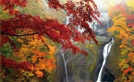日本三名瀑のひとつ!袋田の滝の紅葉とイルミネーションを見に行こう 茨城県大子町