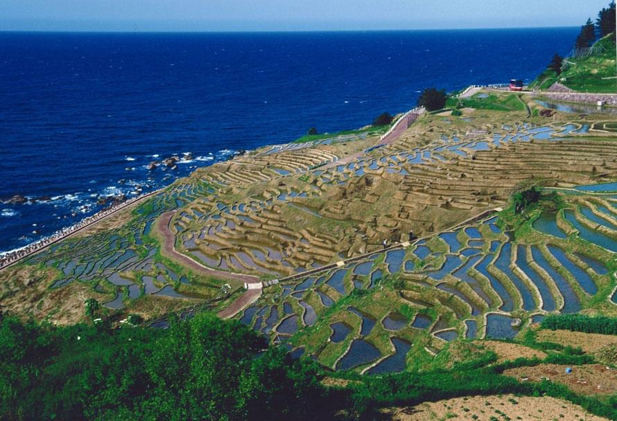 春の千枚田。水を引き入れた景観を眺めると、田んぼの複雑な形状がよくわかる。