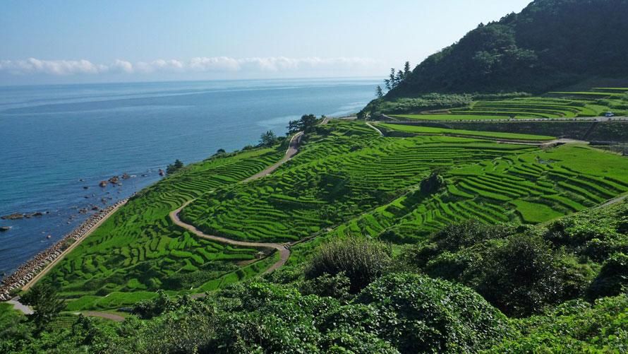 夏の千枚田は、稲穂の緑が目にまぶしいほど。青々とした海との対比が美しい。