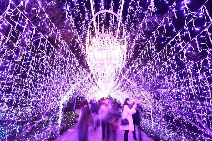 メイン会場は明治時代の英国人貿易商サムエル・コッキングの名前に由来した庭園「江の島サムエル・コッキング苑」。園内では7万個のスワロフスキー(R)・クリスタルビーズを使用したシャンデリアゲートとトンネルがお出迎え。繊細なきらめきが光の世界へと誘う。