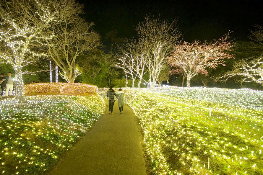 亀ヶ岡広場のイルミネーション。江の島サムエル・コッキング苑を中心に、中津宮広場、亀ヶ岡広場などの会場がある。