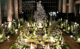 北欧の雰囲気を堪能!幻想的な植物館のクリスマスフラワーショー 兵庫県淡路市