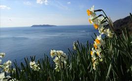 冬の花絶景!500万本のスイセンが咲き誇る花の名所へドライブ 兵庫県南あわじ市