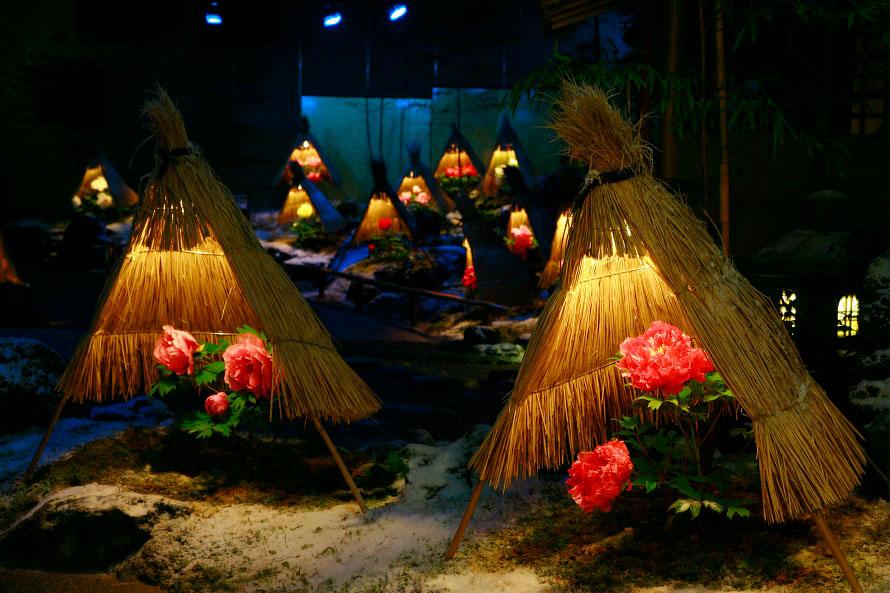 温度や湿度を調整するなどして、通常春に咲く牡丹を冬も含めて通年楽しめる。