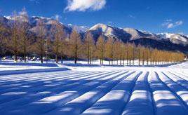 雪に彩られた幻想的な世界へ!約2.4km続くメタセコイアの並木道 滋賀県高島市