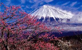 梅や桜と富士の絶景にうっとり!岩本山で春のイベントを楽しもう 静岡県富士市