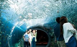 2018年6月にオープン!日本海に面した絶景の水族館へドライブ 新潟県上越市