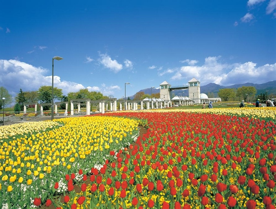 早咲きから遅咲きまで、約70種20万球のチューリップが咲き誇る。奥に見えるのは高さ18mの展望台、パークタワー。