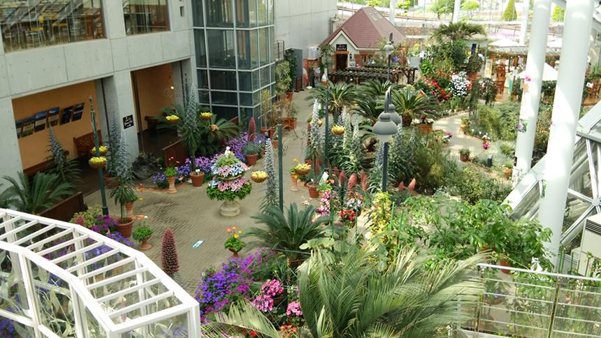 全天候型温室「フローラルドームふらら」では、珍しい熱帯の植物や季節の花がいっぱい。辺り一面が銀世界になる冬でも、ドーム内では花の観賞が楽しめる。(清流の里エリア内)