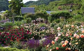 色とりどりのバラや美しい風景に癒される!山間のイングリッシュガーデンへドライブ 滋賀県米原市