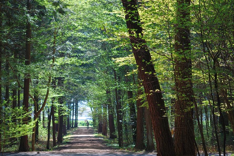 森に囲まれた大芝高原は、森林セラピーにぴったり。ウッドチップが敷き詰められたウォーキングコースをのんびり散策しよう。