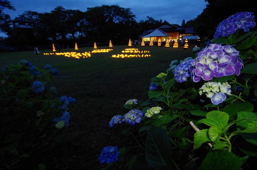 ライトアップされた夜のアジサイ。6月15日にはオープニングイベントとしてキャンドルライトが灯され、さらに幻想的な光景を見ることができる。