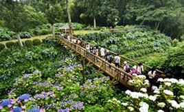 梅雨の時期のお楽しみ!6000株ものアジサイを観賞できるくろばね紫陽花まつり 栃木県大田原市