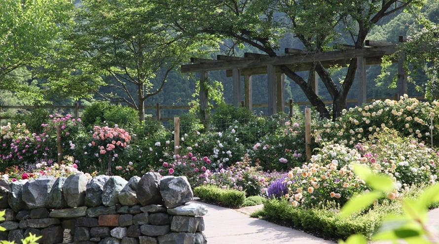 「ENGLISH GARDEN ローザンベリー多和田」は、四季折々の花が咲き誇り見どころもたくさん。「ひつじのショーン ファームガーデン」はもちろん、庭園内もくまなく散策しよう。