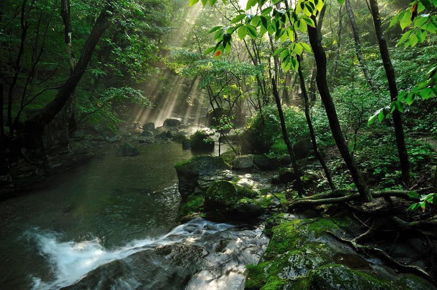 おしらじの滝近くにある県民の森内を流れる宮川は、自然体験にぴったりのスポット。神秘的でダイナミックな景観を堪能できる。