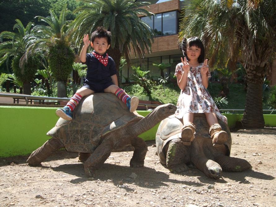 ゾウガメとの記念撮影(1回1000円)は人気の体験。子ども(体重30kg以下)が背中に乗れるほど大きなアルダブラゾウガメと、思い出の一枚を撮影しよう。
