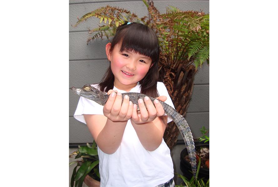ヘビやトカゲ、カメ、ワニなど世界各地の爬虫類に触れることができる「ふれあいコーナー」。無料なので気軽に体験してみよう。通路を自由に歩いているカメに餌をあげる体験も人気だ(1回300円)。