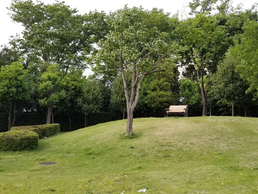 小さな丘の上に設置されたベンチは、ちょっとした休憩や愛犬との散歩にぴったり。高原のような雰囲気はSNSにも映えそう。