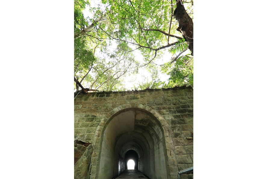 亜熱帯植物、熱帯植物などの外来植物に覆われたトンネル。植物園が開園していた当時からあるこのトンネルを抜けると、第2展望広場へ出ることができる。