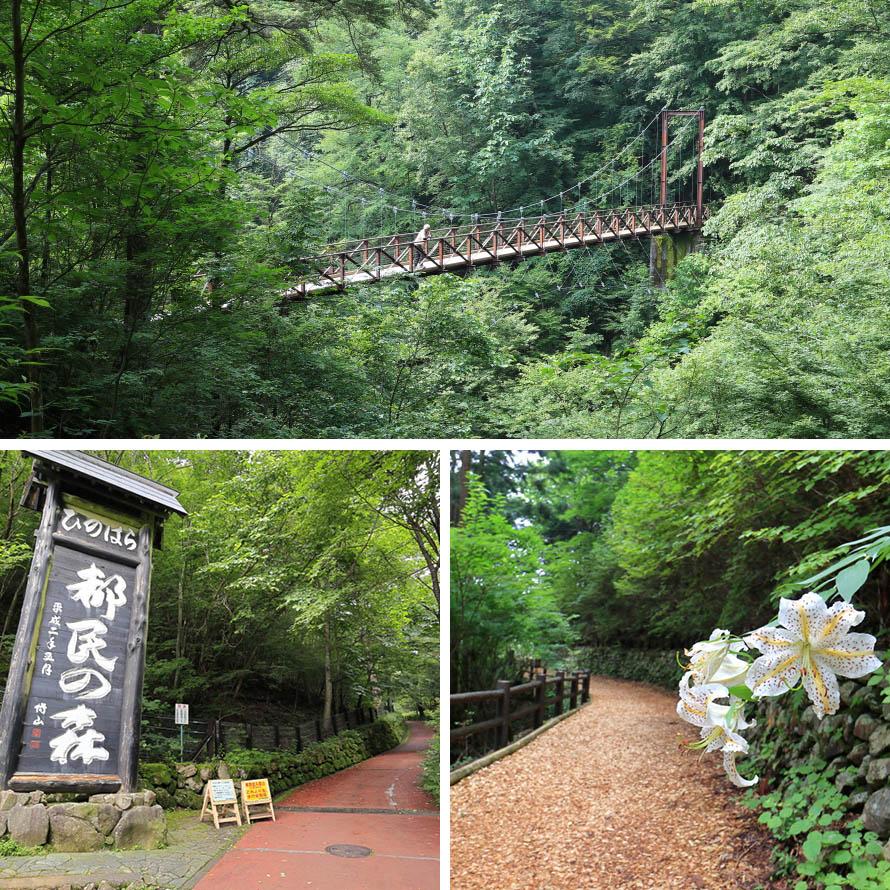 滝の目の前にかかる吊橋(上)と都民の森入口(左下)。滝までの遊歩道にはウッドチップが敷かれており歩きやすい。(右下)。
