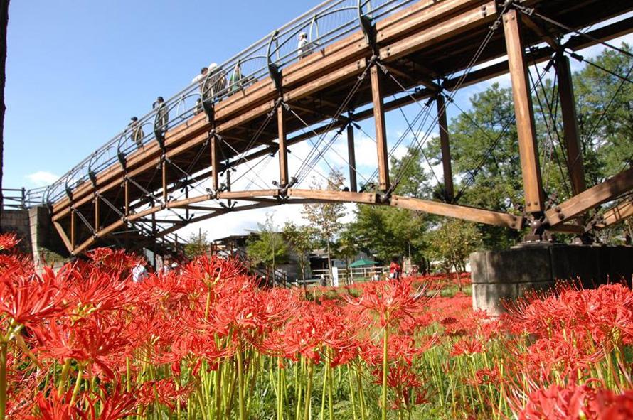 公園内の高麗川に架かる歩行者専用の橋「あいあい橋」。上空からの眺めも楽しみたい。