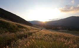 狙い目はサンセットタイム!すすき草原が黄金に輝く瞬間を見に行こう 神奈川県箱根町