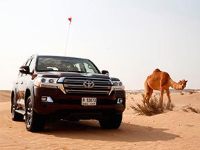 帰ってきた!デザートサファリ 今度は自分でドバイの砂漠をドライブ