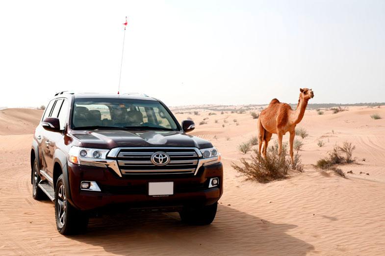 写真はドバイの砂漠だが、サハラ砂漠が国土の3/4を占める西アフリカのモーリタニアでは、市街地では乗用車も走っているが、少し砂漠の町へ移動すると、ランドクルーザーやランドローバー・ディフェンダー、日産・パトロール(日本名:サファリ)などラダーフレームの4WD車になり、さらに砂漠を越えて奥地の村へ行くと、ランドクルーザー70とラクダしか移動手段がなかった。砂漠の奥地に暮らす人々が、ランドクルーザーの信頼性、耐久性、悪路走破性の高さを、身をもって知っている